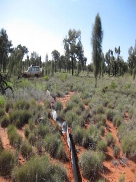 Desert Oak Trap Lines