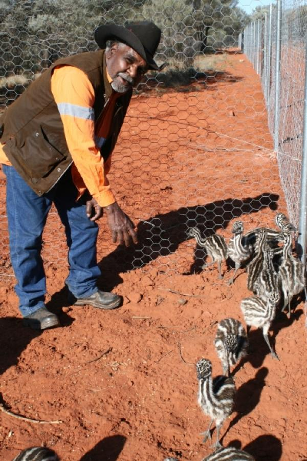 Ranger David Wongway helps the emu chicks